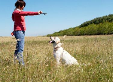 cane comportamento psicologo dieta atteggiamento aggressivo disciplina
