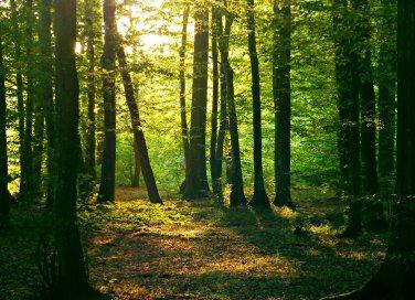 Boschi e foreste nei sogni