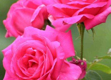 7 motivi per coltivare la lavanda donnad for Potare le rose