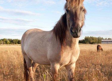 oroscopo cinese cavallo