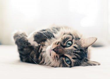 La dieta del gatto