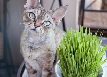 erba gatta a cosa serve ed effetti sugli animali
