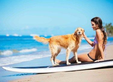 Si possono portare i cani in spiaggia e sulla battigia?