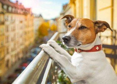 Aggressivit dei cani come fare donnad for Cane che abbaia