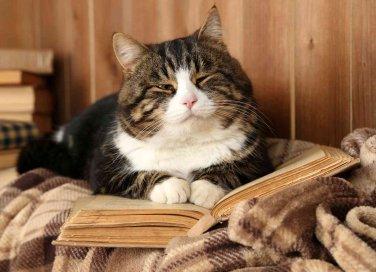 allevare ed educare un gatto