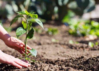 come proteggere l'orto
