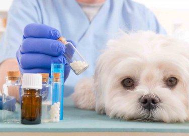 leishmaniosi cane sintomi e cura