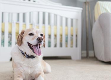 Come tenere pulita la propria casa con animali e neonati in casa
