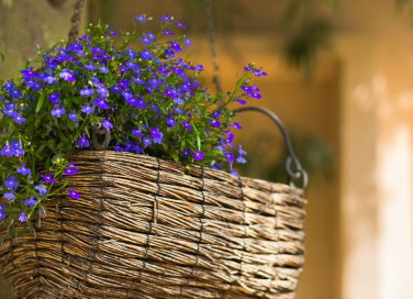 Concimi naturali rimedi casalinghi per le piante donnad for Fiori primaverili da balcone