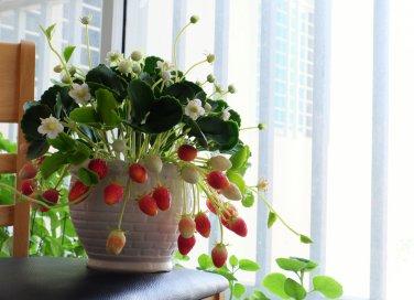 Come coltivare le piante e i fiori giardino fai da te for Fragole piante in vaso