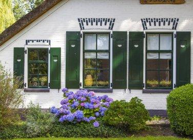 Nidi di vespe in casa: come affrontarli