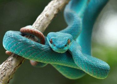 serpenti, sogni, lotto