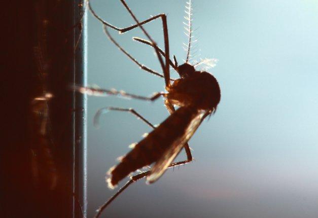 Addio fastidiosi insetti!