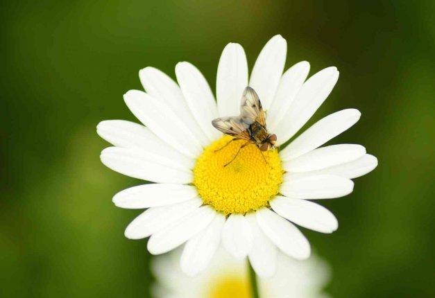 Punture di insetti: rimedi tradizionali e naturali contro vespe, zanzare, api e calabroni