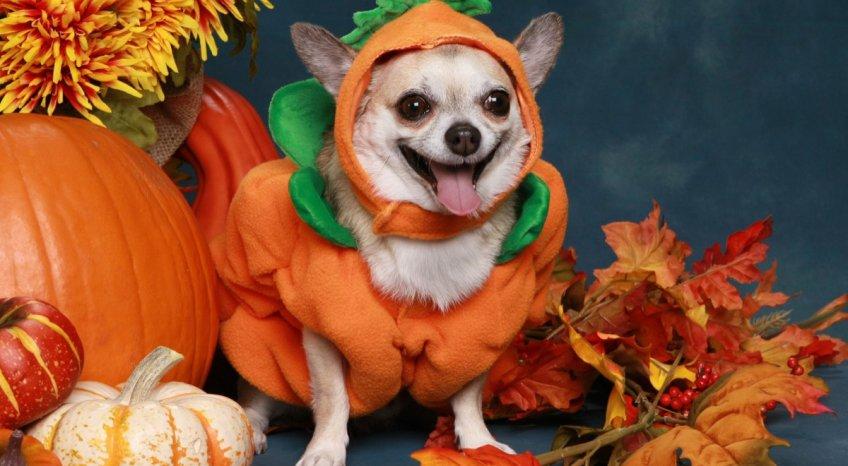 Costumi di Halloween per animali: 5 idee divertenti per gli amici di zampa
