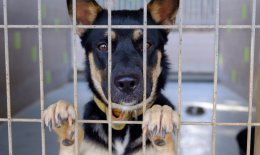 adottare cane, canile, cosa sapere