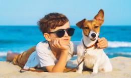 cane al mare, consigli, benessere