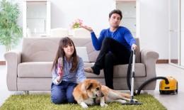pulci, casa, animali