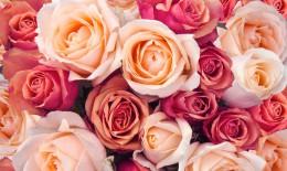come conservare rose recise, come mantenere fresche rose recise, come essiccare rose