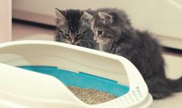 gattini, bisogni, lettiera