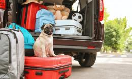 cane, vacanza, valigia