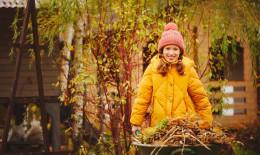 Cura del prato in autunno