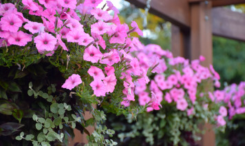 piante estive cascata