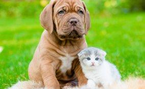 cane gatti casa sicura