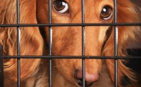 animali cane volo compagnia aerea vacanza informazioni suggerimenti