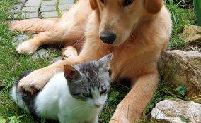 vero, falso, cani, gatti