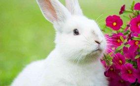 nomi per conigli