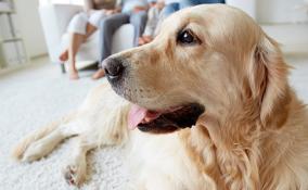 insegnare al cane a fare i bisogni