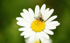 Punture di insetti rimedi tradizionali e naturali
