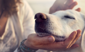 I nostri animali comprendono quello che diciamo. Lo dice la scienza