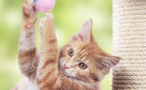 Un angolo a misura di gatto