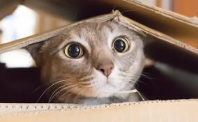 I giochi fai da te per il tuo gatto