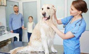 spese veterinarie detraibili 2017