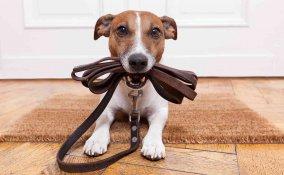 Regolamento cani al guinzaglio: le nuove regole