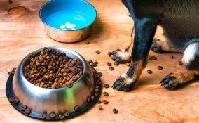 animali domestici, pulizia, rimedi naturali