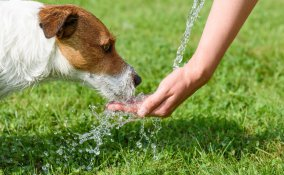 cane, colpo calore, strategie anti caldo