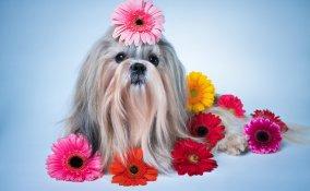 cane, pelo maleodorante, cattivi odori