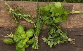 erbe aromatiche conservazione
