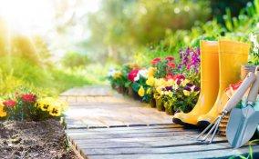piante-acidofile, piante acidofile quali sono, acidificare il terreno