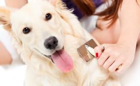 cane, spazzola, animali