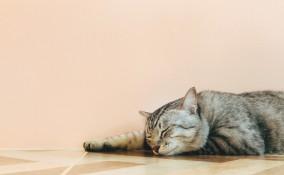 proteggere gatti caldo