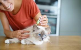 gatto, come mettere antipulci, metodo