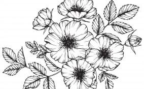 disegni da ricamare, disegni punto catenella, punto catenella schemi