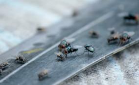 come eliminare mosche, prodotti contro le mosche, rimedi contro mosche