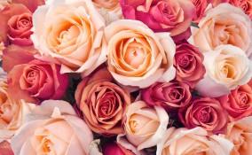 frasi fiori, citazioni fiori