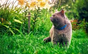 Consigli utili donnad - Allontanare i gatti dal giardino ...